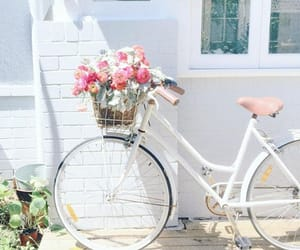 aesthetic, bicycle, and photography image