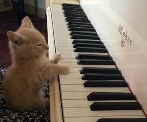 cat, piano, and cute image