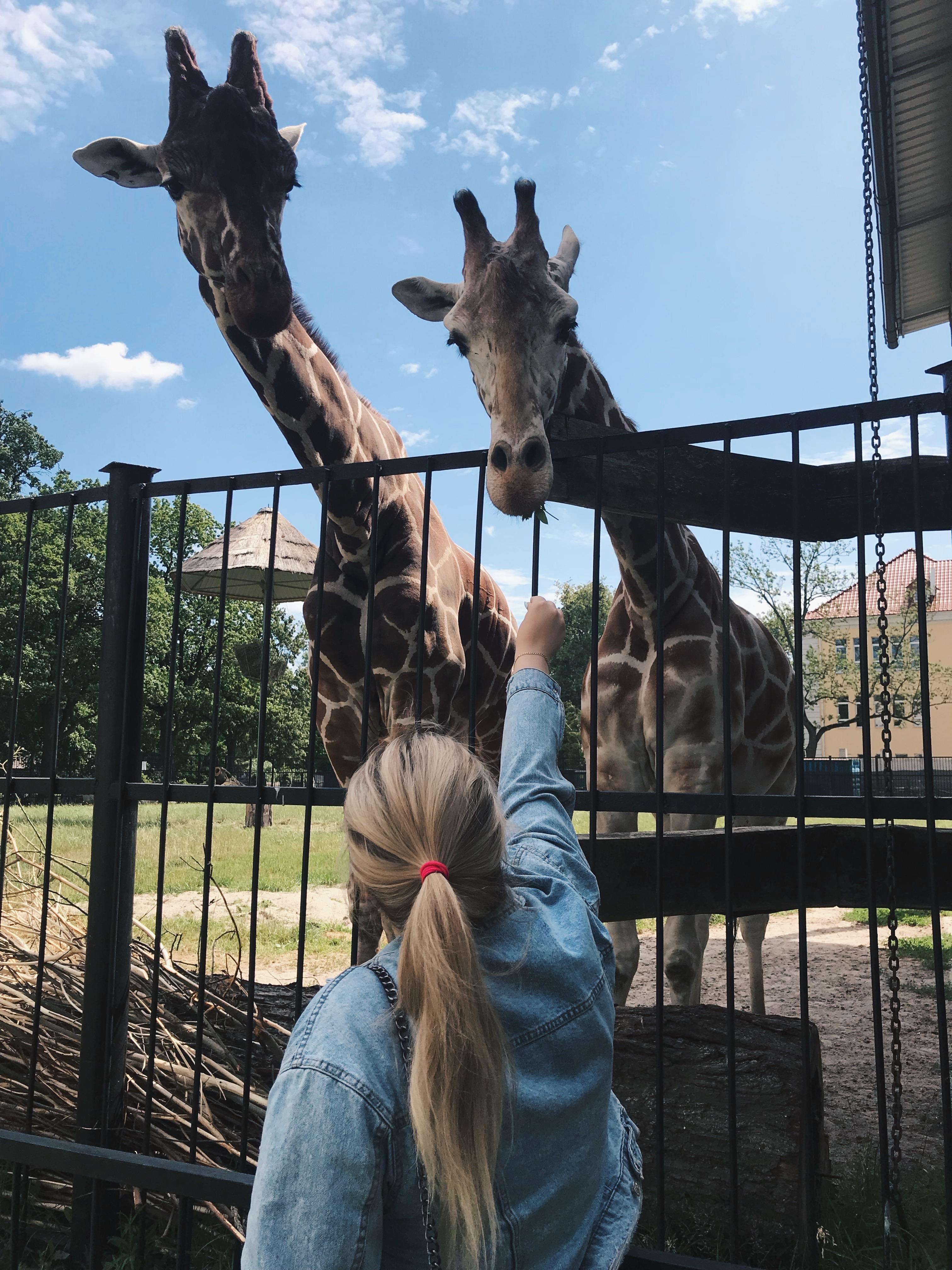 Giraffe 🦒 discovered by Anastasia Shalut'ko on We Heart It