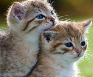 cat, kitty, and animals image