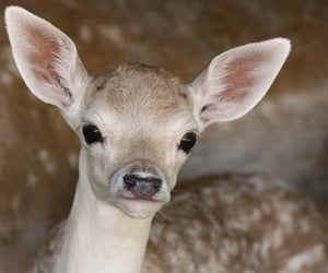 cute, deer, and fawn image