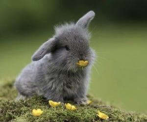 Imagem de bunny, fluffy, and spring