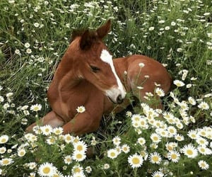 horse, animal, and flowers image