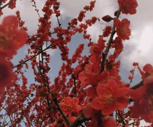 aesthetic, flowers, and japan image