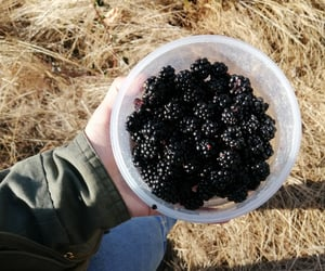 blackberries, country, and country life image