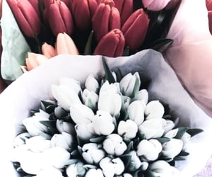 flowers, tulips, and nature image