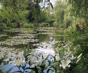 lake, nature, and soft image