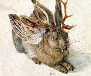 albrecht durer, durer, and rabbit image