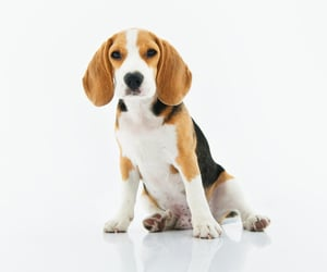 wholesale dog supplies, distributor dog products, and wholesale dog food image