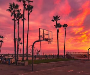 palm trees, sky, and sunset image