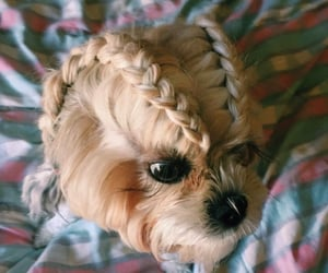 braided hair, dog, and funny image