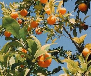 orange, fruit, and blue image