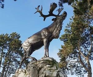 caribou, france, and World War I image