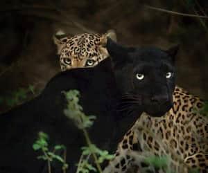 animals, Animales, and naturaleza image