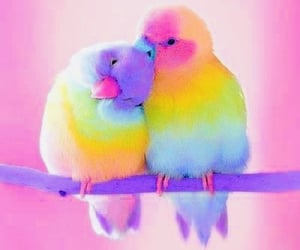 beautiful, colorful, and love birds image