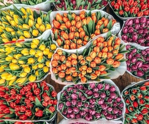 tulips, flowers, and spring image
