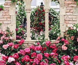 architecture, flowers, and london image