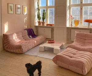 interior, aesthetic, and dog image