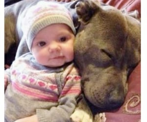 babies, familypets, and puppies image