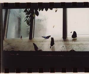 butterflies, butterfly, and film image