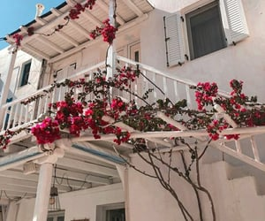 flowers, mykonos, and summer image
