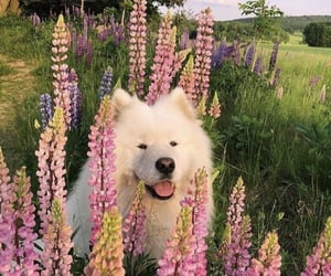 animals, sweet animals, and sweet dogs image