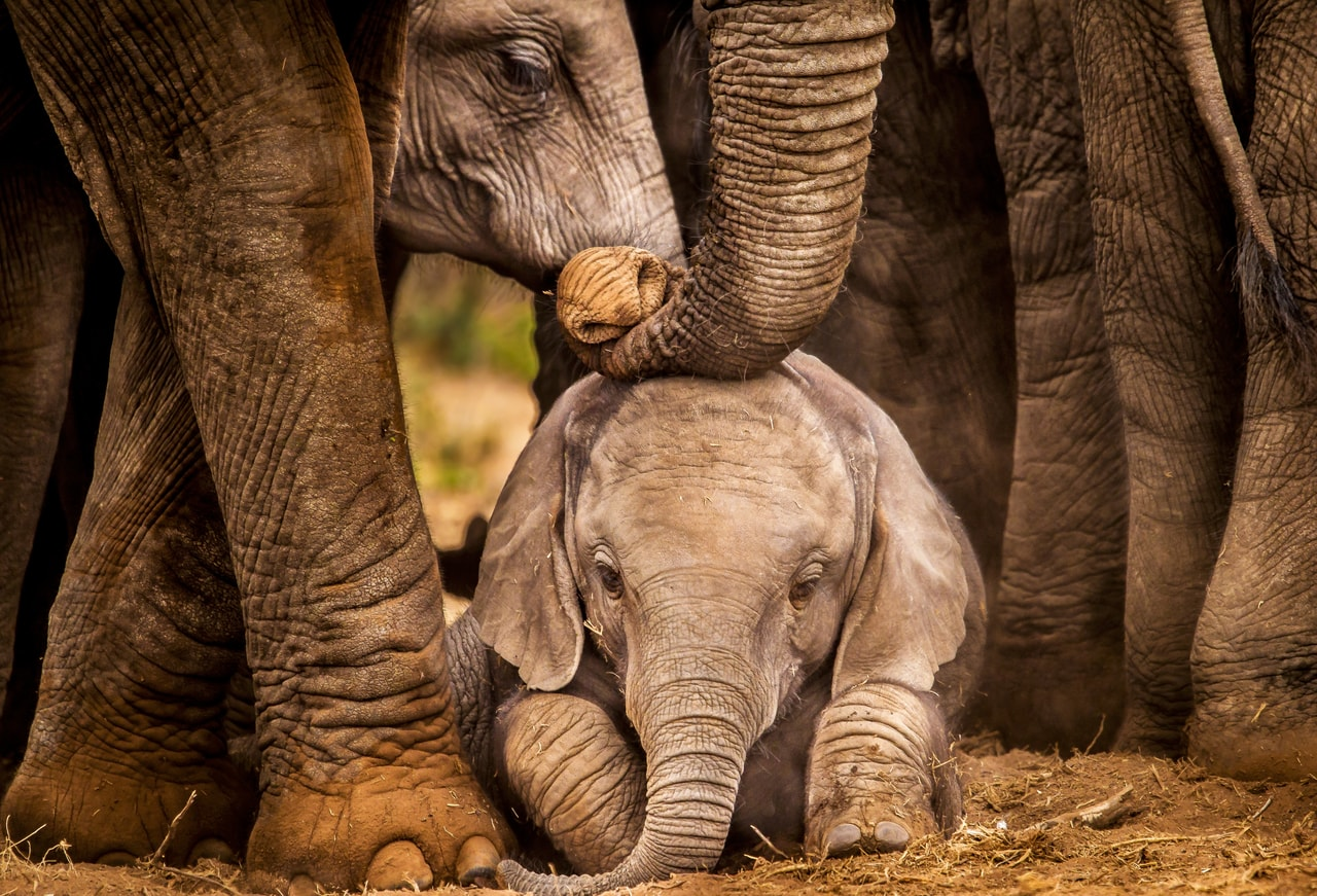 Mother love. shared by Emir Klis on We Heart It