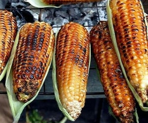 food, corn, and elotes image