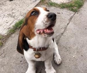 basset hound, love, and dog image
