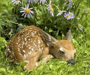Animales, cute, and naturaleza image