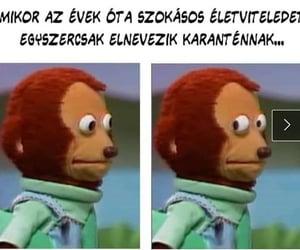 meme, wtf, and magyar image