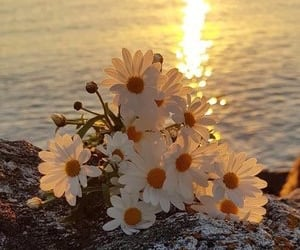 flowers, sea, and beautiful image