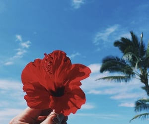 flowers, summer, and red image