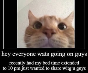 meme, cat, and funny image