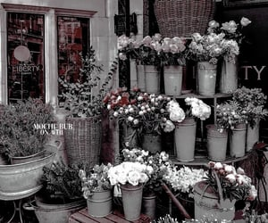 aesthetic, theme, and flowers image