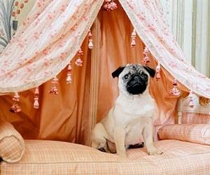 dog, lovely, and marie antoinette image