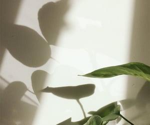 light and plants image