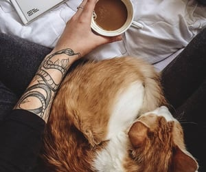 cat, coffee, and drink image