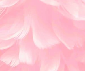 background, pink, and rosa image