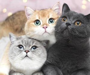 cat, cute, and tender image