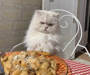 cat, food, and pasta image