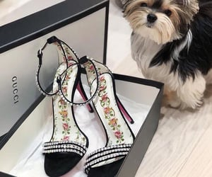 dog, gucci, and luxury image