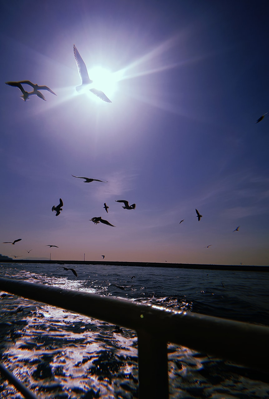 aesthetic, grunge, and seagull image