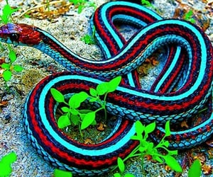 colorful, exotic, and snake image