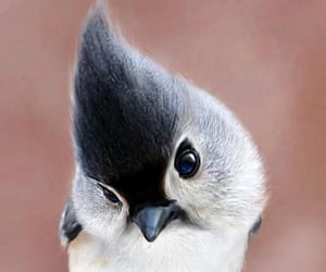 adorable, birds, and exotic image