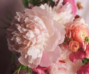 flores, flowers, and soft image