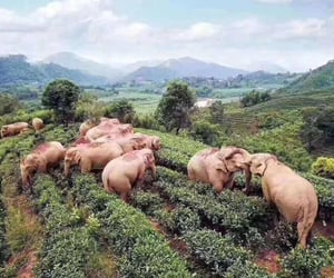champ, Éléphant, and elefant image