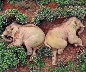 nature, drunk, and elefant image