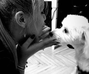 dog, kiss, and kisses image