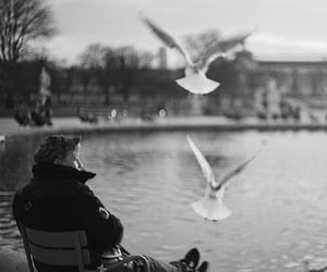 analogue, tuileries, and birds image
